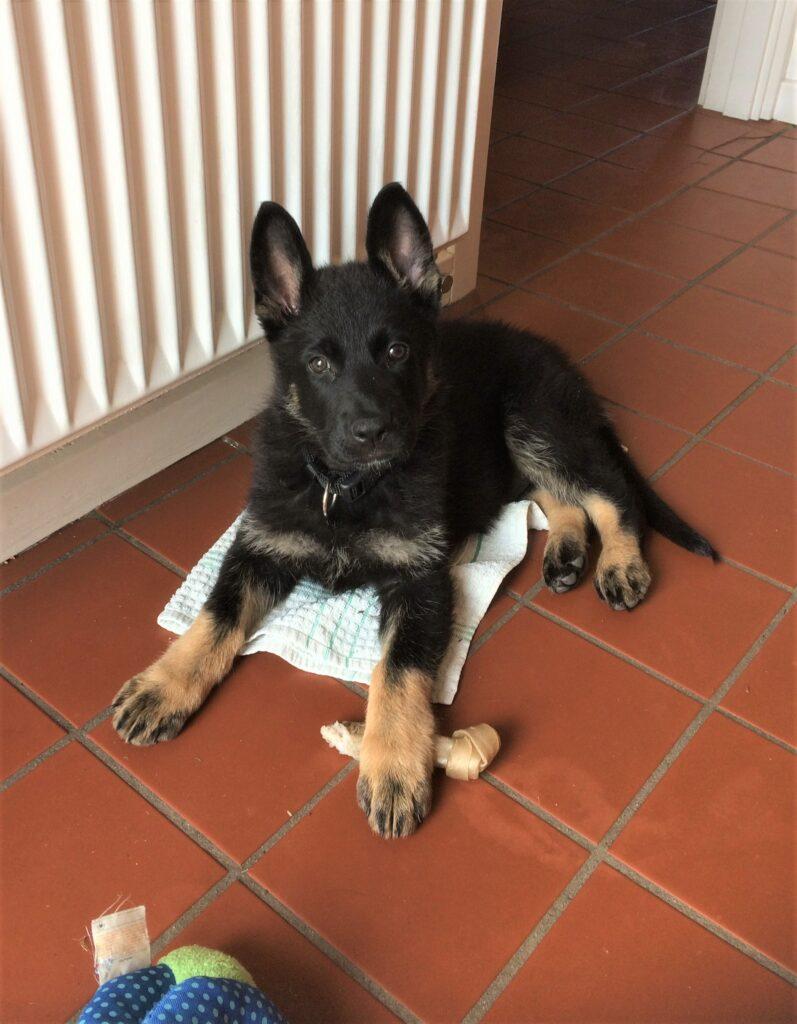 Read more about the article Tillykke til Henning med sin nye hund, Saco